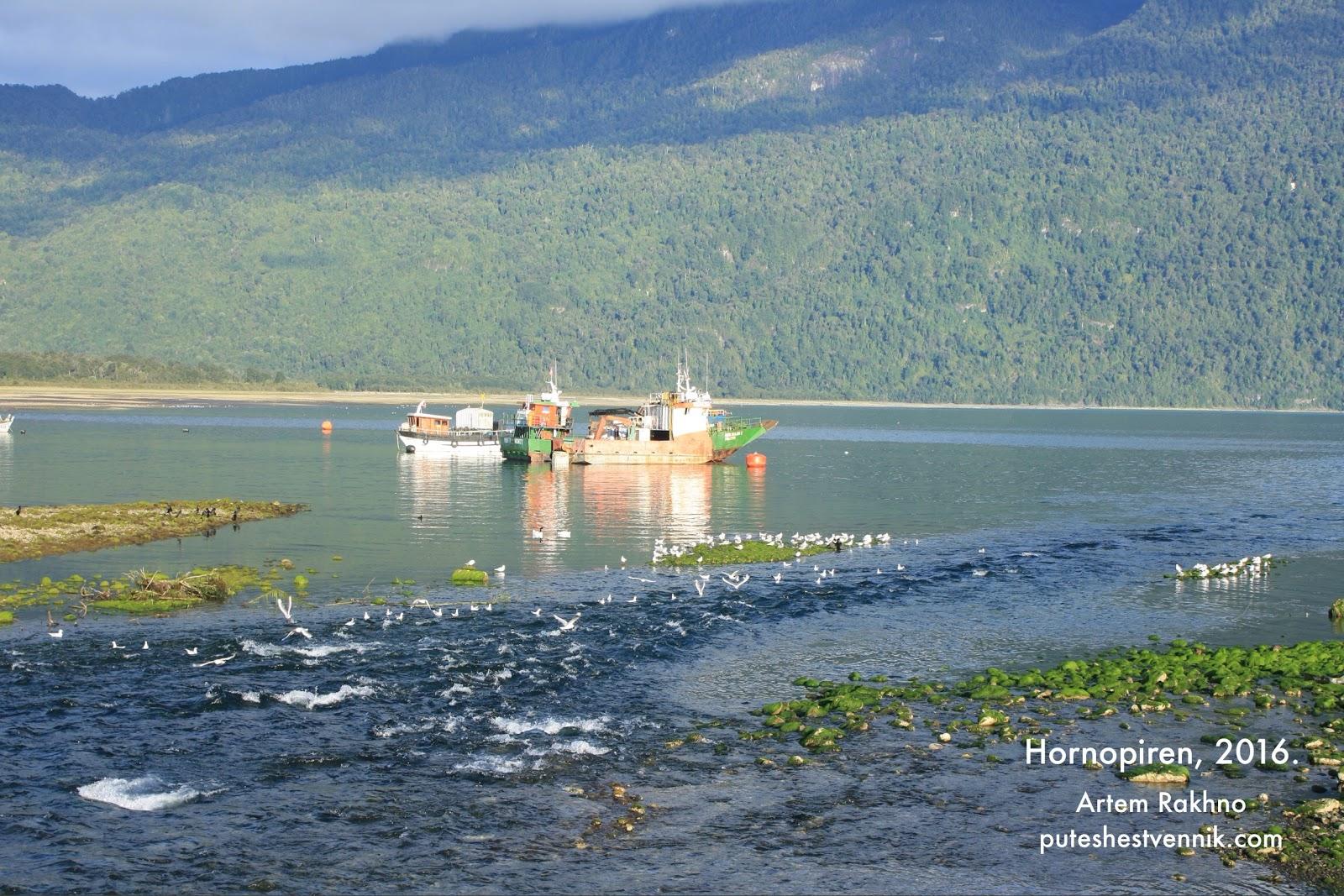 Устье реки и чайки в Чили