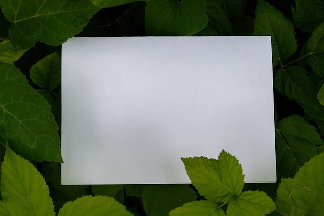 Blank Paper Surrounded With Leaves in Natural Environment Free JPEG Image