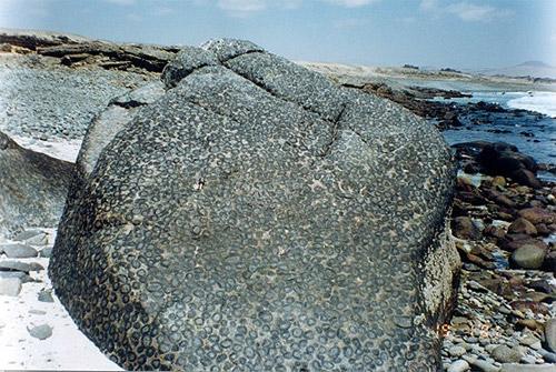 Piedra orbicular