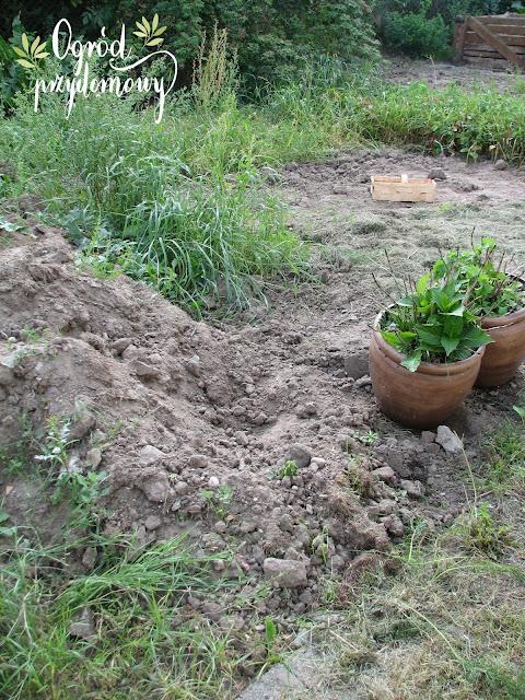 walka o warzywnik, ogród przydomowy