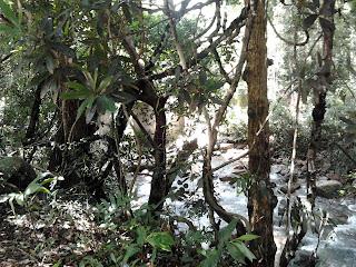 Trekking facility at Vazhvanthol Waterfalls