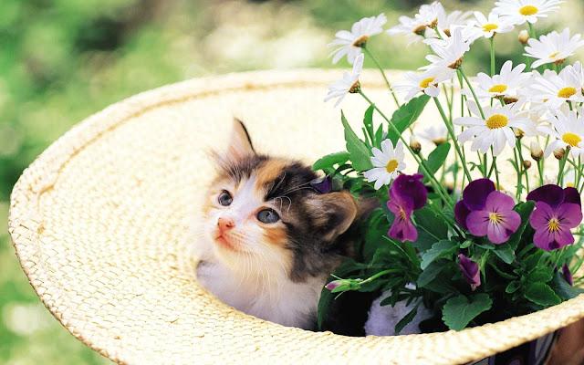 اجمل صور قطط كيوت ، صور قطط جميلة hd | اجمل صور القطط في العالم 2020