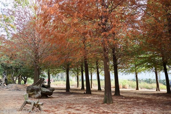 南投139線八卦路落羽松森林|還有馬鹿可以坐|IG網美照景點