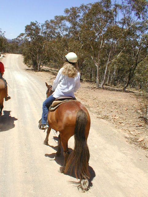 Horse riding in the Snowy Mountains, Australia. Photo by Loire Valley time Travel.