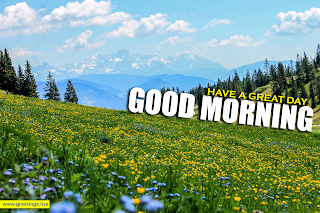 fresh Nature beautiful yellow flowers meadow images with morning wishes,mountains,pine trees,landscape,greetings text,English