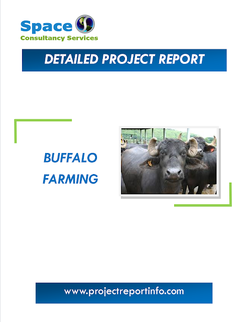 Project Report on Buffalo Farming