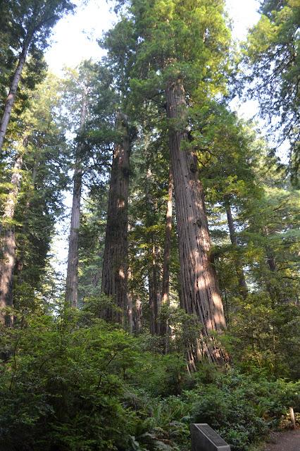 dedication stone below tall trees