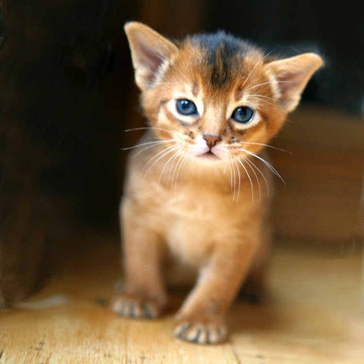 Show Me Some Cute Cats