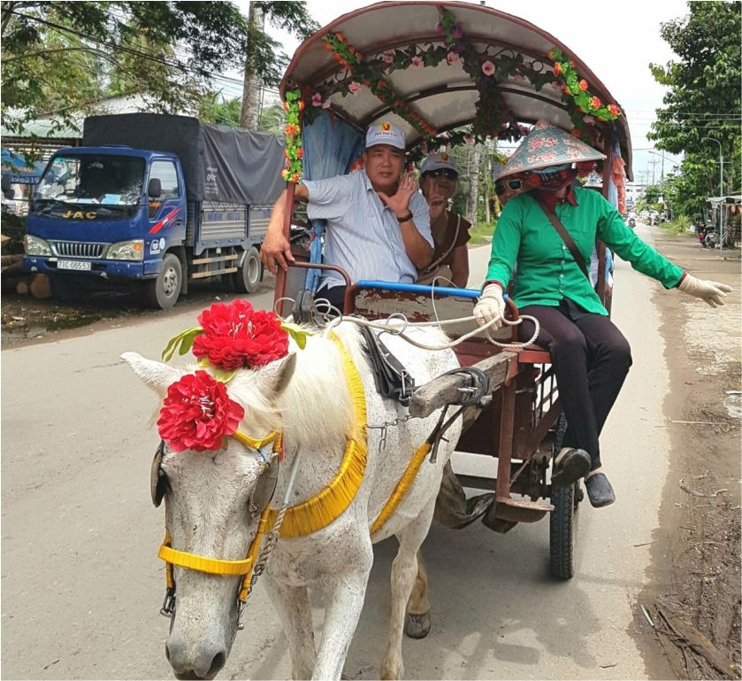 Đi xe ngựa tour lục tỉnh miền tây