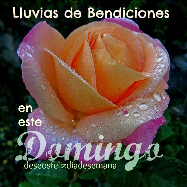 dia domingo mensaje saludo de bendiciones frases con foto de rosa bella de fondo