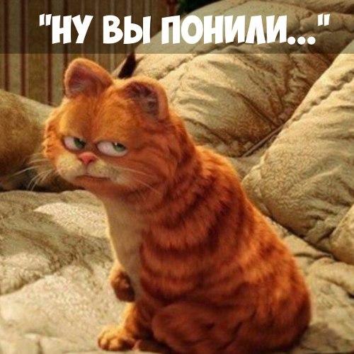 Блог Кота Моти  - Страница 2 Z2NlGZ-P3P8