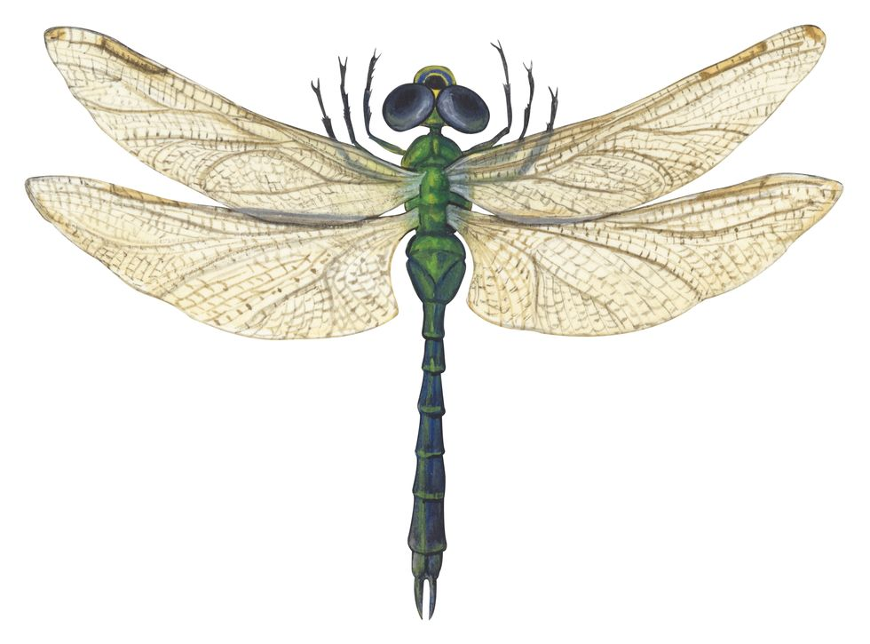 CIA Spying Robot Dragonfly