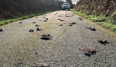 Ratusan burung mati di jalan