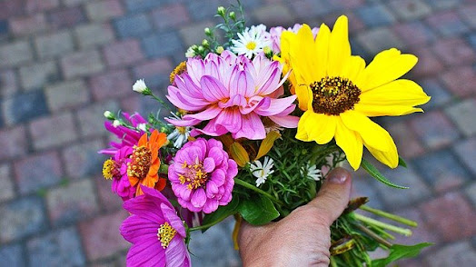 Bouquet of annual flowers in bloom