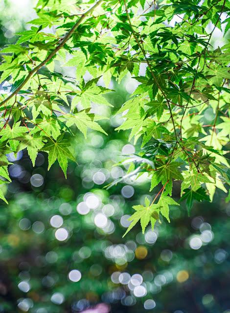 木,新緑,緑,木漏れ日