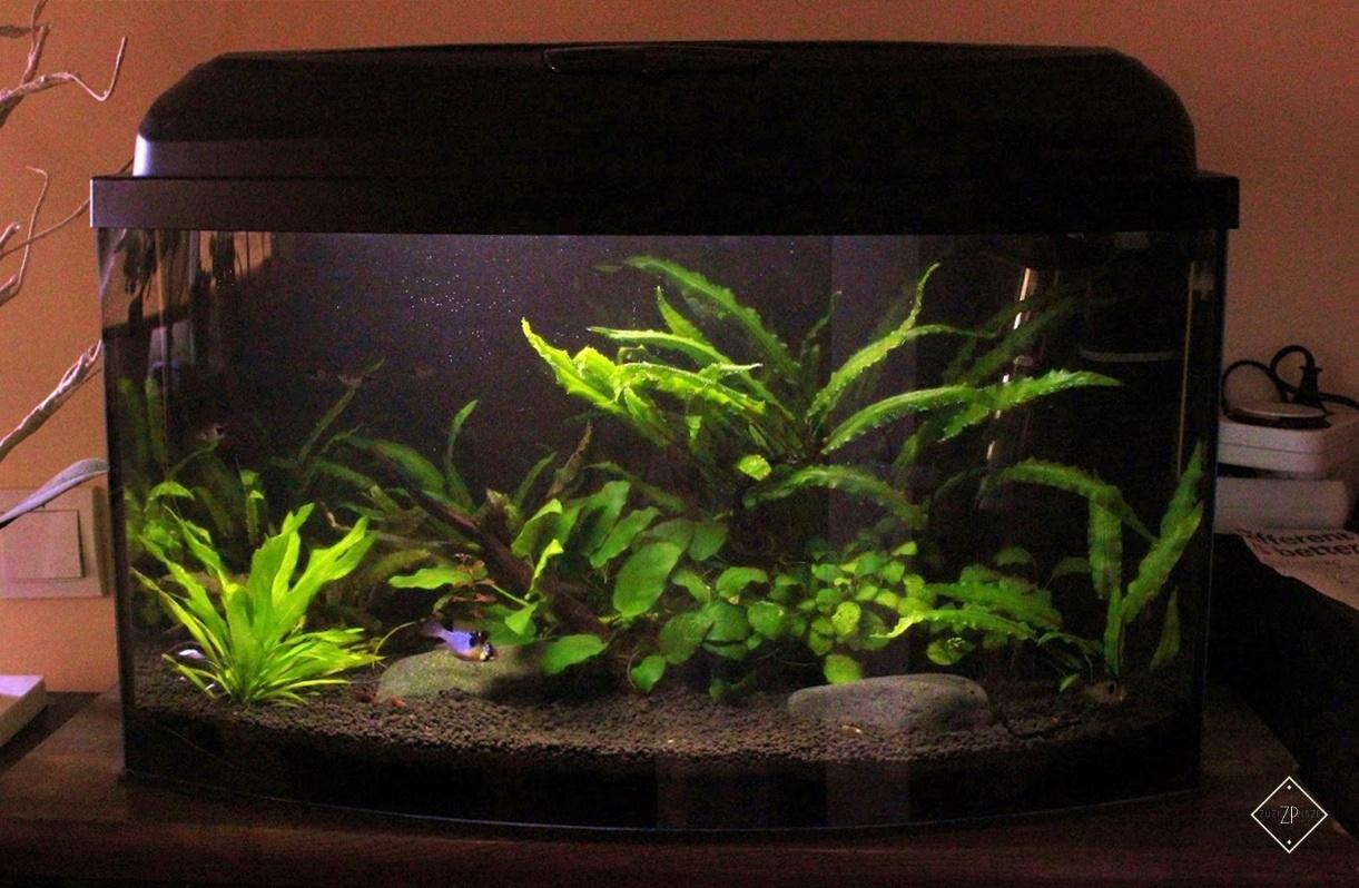 Co warto wiedzieć przed założeniem akwarium w domu?