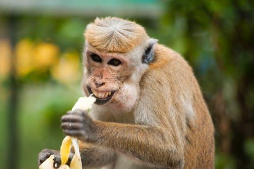 10 Reasons Why You Should Eat Bananas