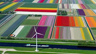 Οι τουλίπες στην Ολλανδία μόλις άνθισαν και μοιάζουν σαν να είναι βγαλμένες από παραμύθι.