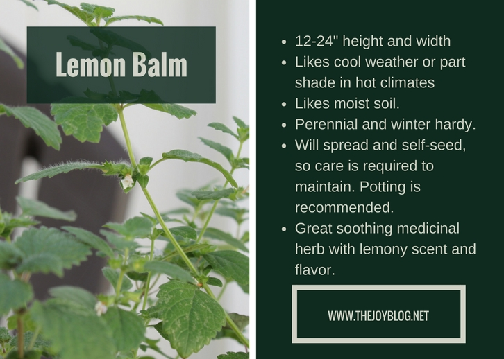 Potted Lemon Balm // How to Grow & Use Lemon Balm // www.thejoyblog.net