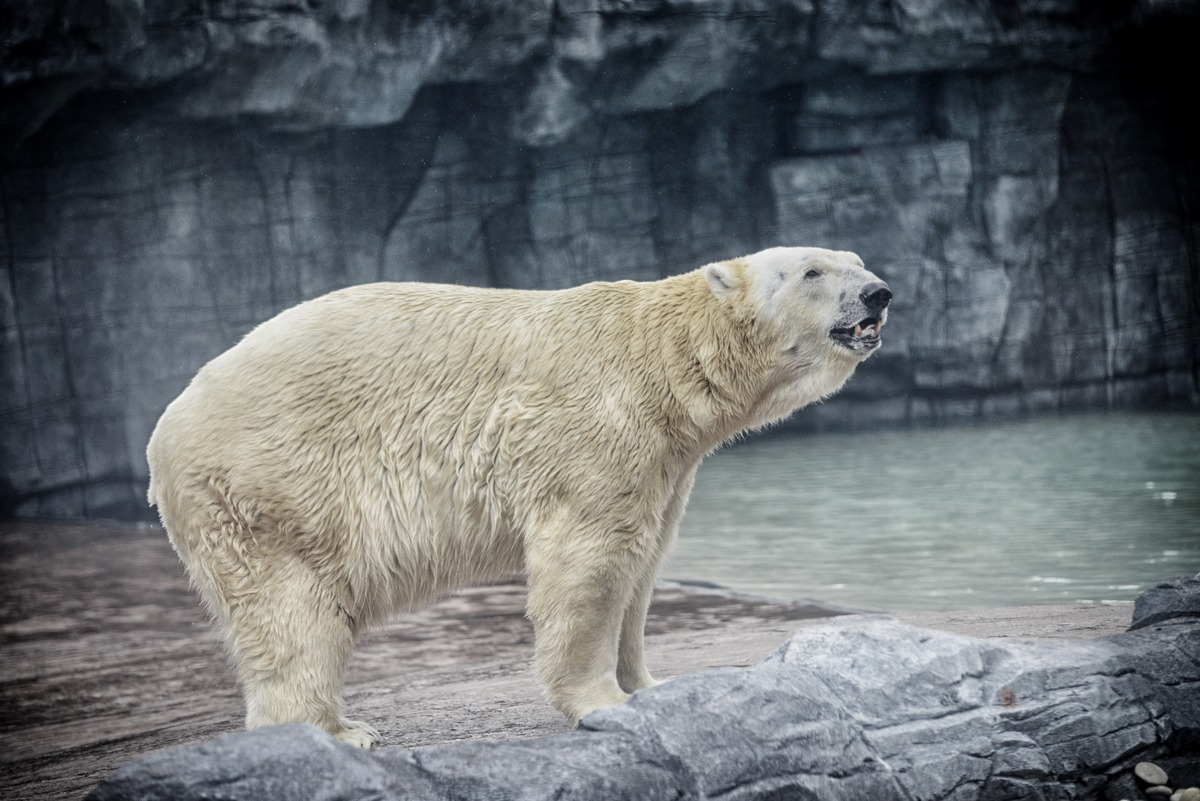The zoo vets and his care team agreed to not revive him from anesthesia on humane and welfare grounds following a second health examination on Wednesday (April 25).