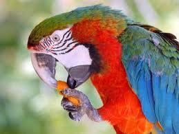 Pet Supplies Melocotón Y Papaya Initiative 5l Fresco Mascota Jaula Desinfectante Bird Supplies