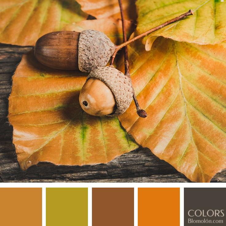 variedad_en_color_paletas_de_colores_89
