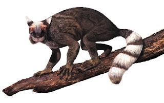 Il plesiadapis, primate preistorico che viveva sugli alberi