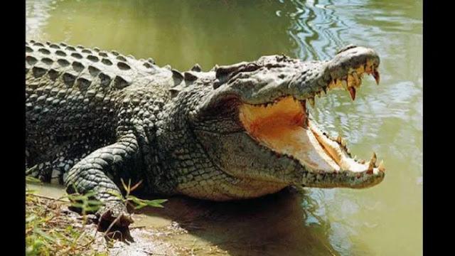 Crocodile swallows 8-year-old in Indonesia
