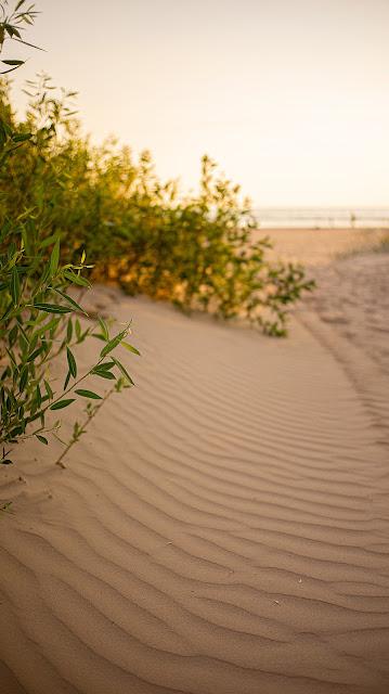 Пляж нетронутая земля узор песок юг южный тепло курорт Сестрорецк