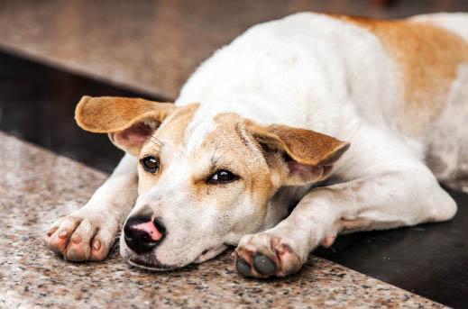 Co zrobić, gdy znajdziemy psa?