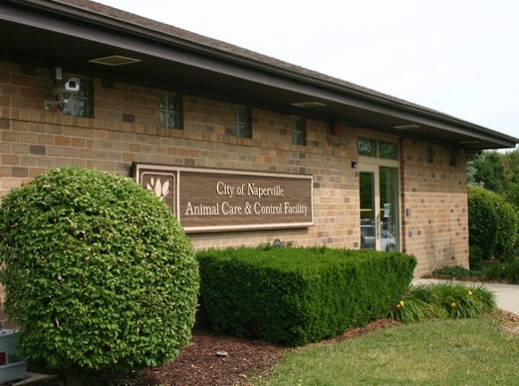 Naperville's Animal Care and Control Now Shut on Sunday