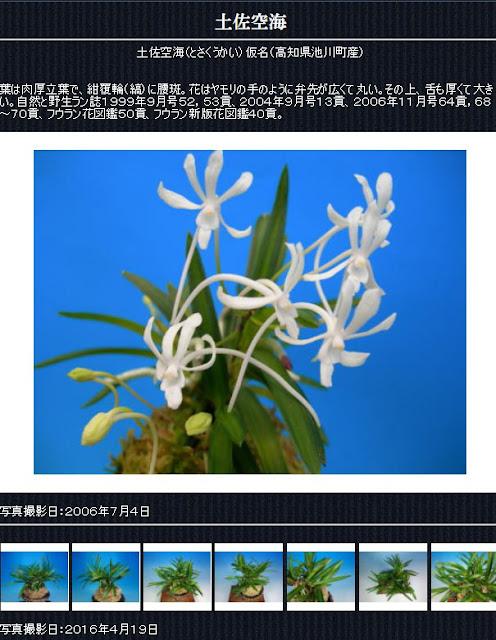 http://www.fuuran.jp/jiman_tosakuukai.html#%E5%9C%9F%E4%BD%90%E7%A9%BA%E6%B5%B7%E3%81%AE%E8%A9%B3%E7%B4%B0