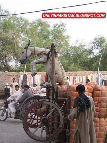 Funny Pakistani Donkey photo