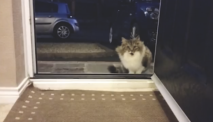 STRAY CAT BEGGING TO BE LET INSIDE HOUSE, GIVES HER NEW HUMANS SWEETEST 'SURPRISE' WHEN THEY LET HER IN