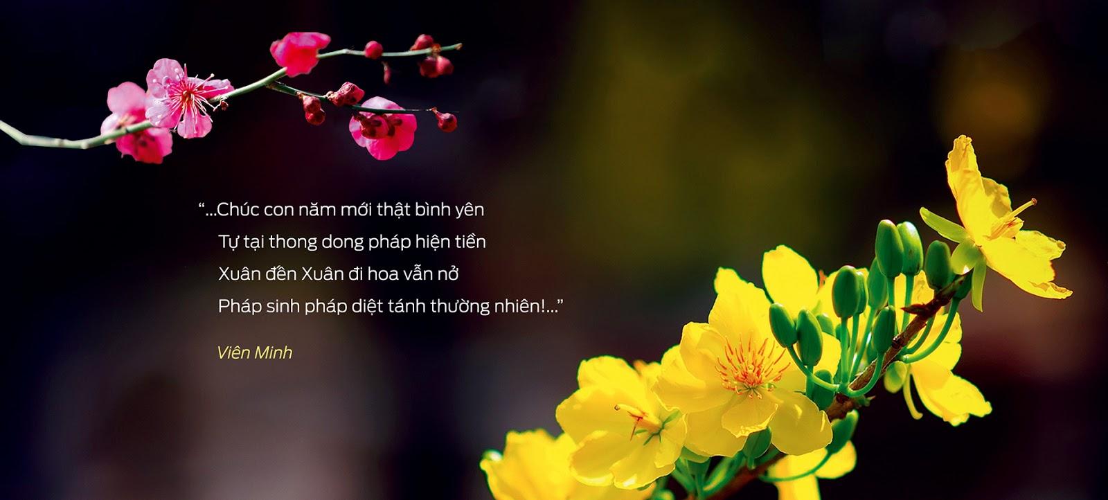 Xuân đến, xuân đi hoa vẫn nở...