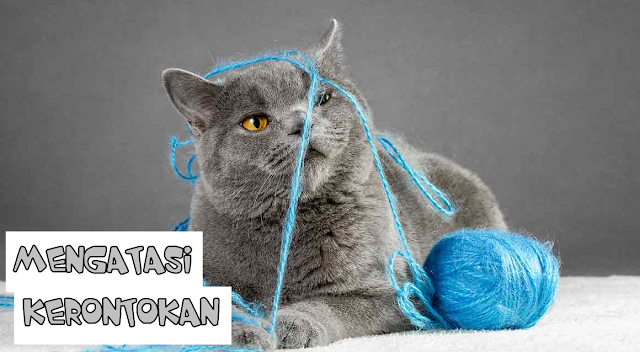 Bulu Kucing Rontok Apakah Berbahaya