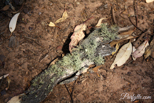 old branch provides home for lichen
