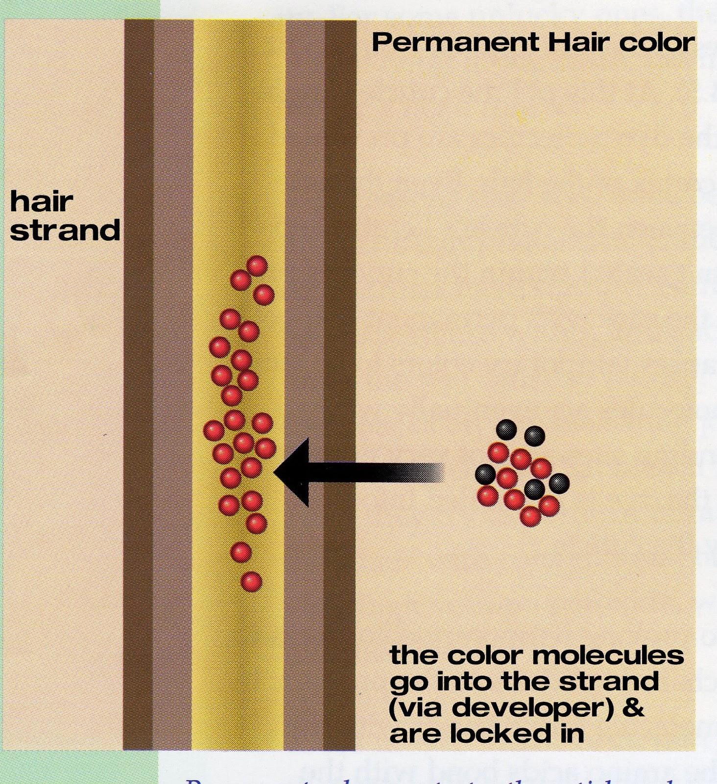 Penetrate the hair shaft #11