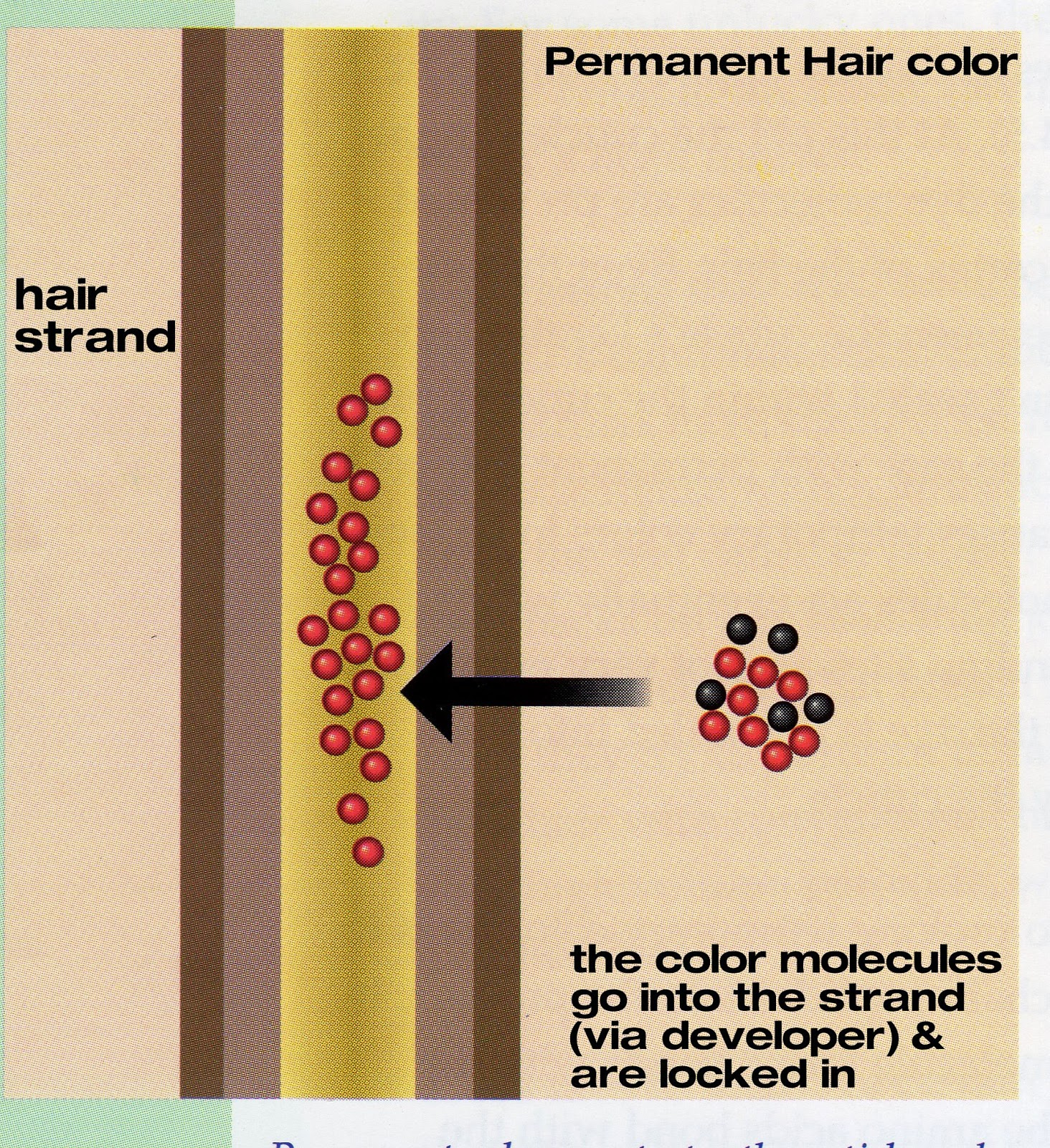 How Hair Coloring Amp Blonding Works