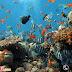 Lặn ngắm san hô tại Phú Quốc - Trải nghiệm thú vị và đáng nhơ