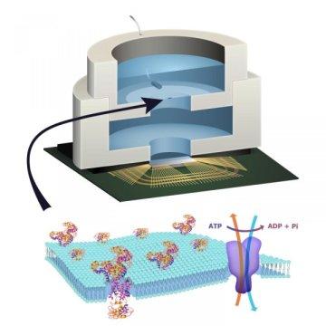 دراسة تكشف عن إختراع إليكترونيات حيوية تم صنعها لأول مرة