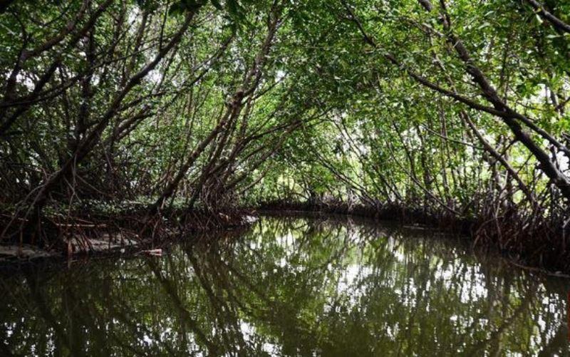 Menjaga Keasrian Taman Wisata Alam Jering Menduyung yang di Dominasi Mangrove