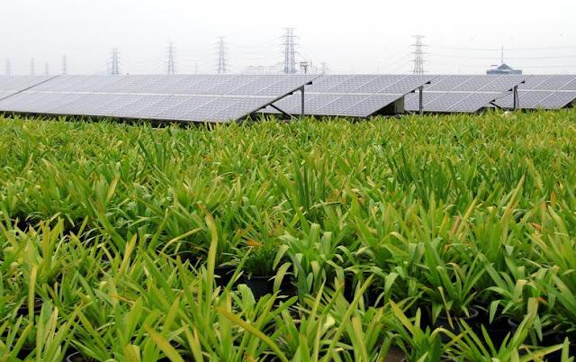 Ferme solaire. Photographie Sunseap Asset