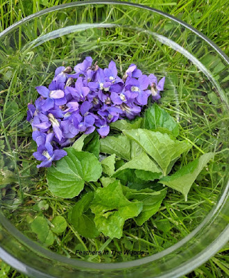 Wild violet flowers and leaves in clear glass bowl