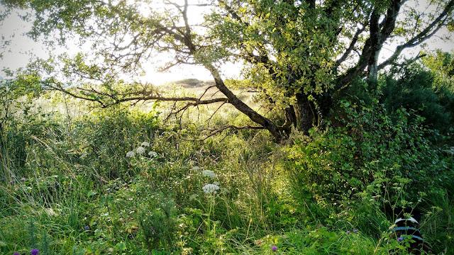 wild Connemara