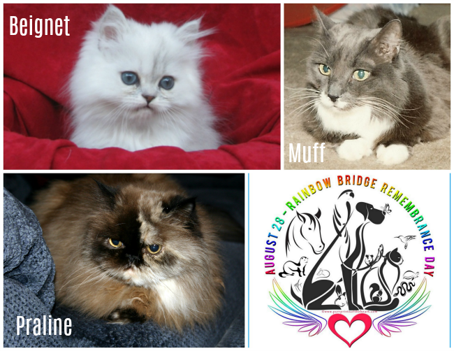 Collage of Beignet, Praline, and Muff - cats owned by Mom Paula who are now at the Bridge