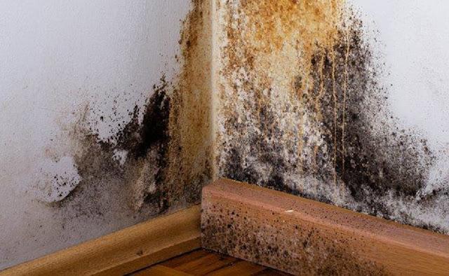 Waspada Jamur Dinding Rumah Mengganggu Kesehatan Anda