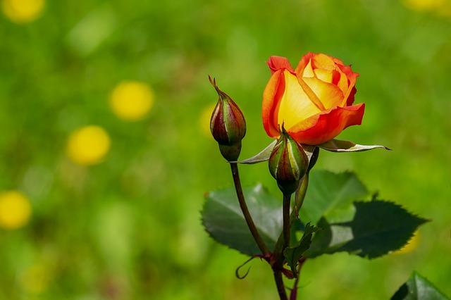 hoa đẹp nhất thế giới 15
