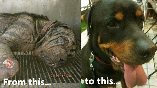 Look at the amazing transformation before and after rescuing a dog, what love can do