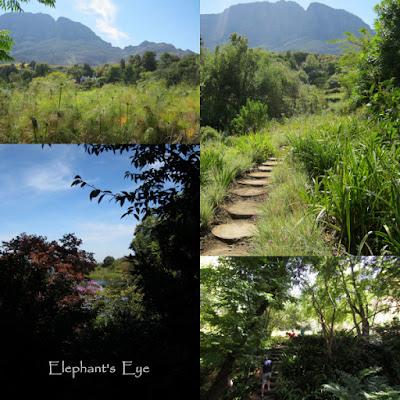 Tokara garden